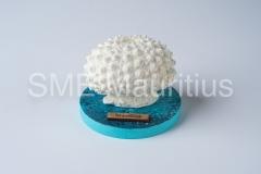 SZ018-Round-Base-with-Urchin-Casting-World-Ltd-Mrs-Sharanaz-Subratty-Tel-52539620-4633759-